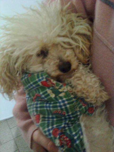 Mancha, la mascota de Lucía F. (exalumna)